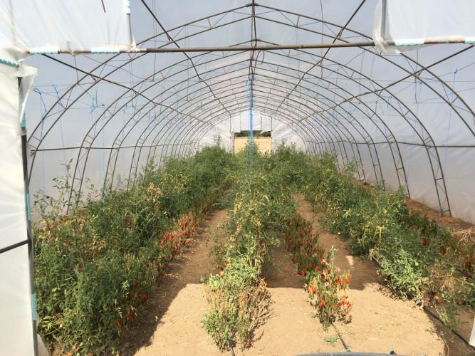 Продавам оранжерии - Снимка 4