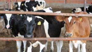Вижте новите правила за работа на Съвета по животновъдство