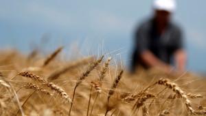 Семинарът на НАЗ: Възможности за зърнопроизводството след 2020 г.