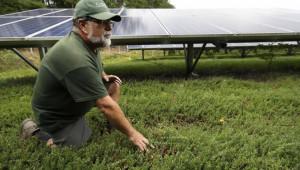 Фермери печелят от соларни панели над полетата си