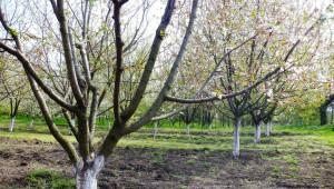 На ръба: Ще изчезнат ли ябълките от Добруджа?