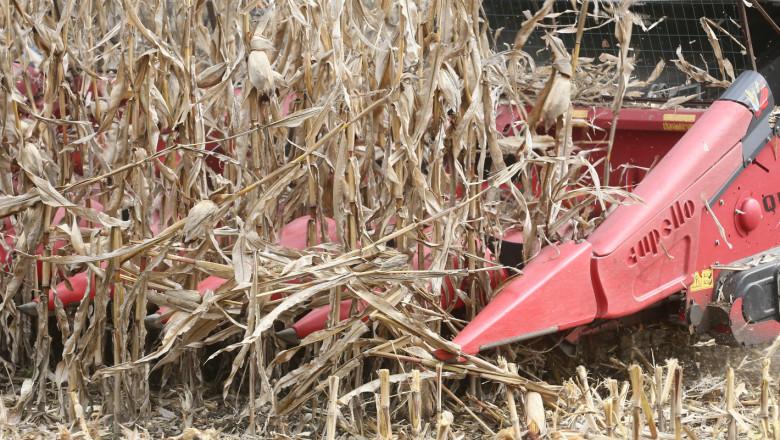 Министерството анализира: Фермерите изкараха по-малко слънчоглед и царевица от декар