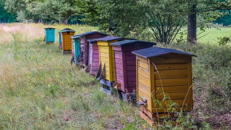 Пчеларството: С най-висок дял в биологичното земеделие