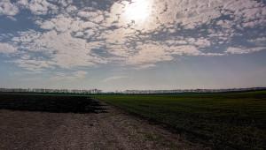 И в Силистренско летят мухи по пшеницата - Agri.bg