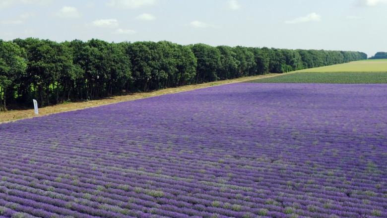 Инвестиция: 2,6 млн. лв. за нови горски пояси в Добруджа