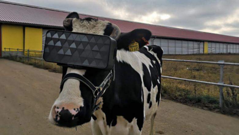 Виртуална реалност увеличава млеконадоя