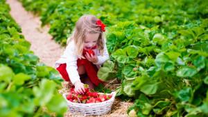 Какво е нужно за успеха на българските плодове и зеленчуци?