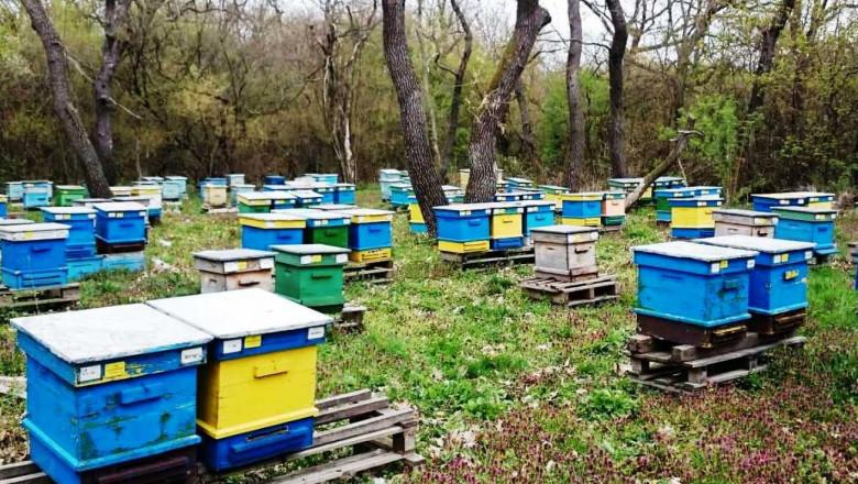 Диагноза: Пчеларският сектор е в колапс