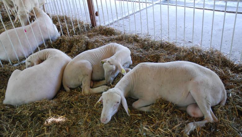 Асоциация за развъждане на Лакон: С маркетингов план за своите фермери