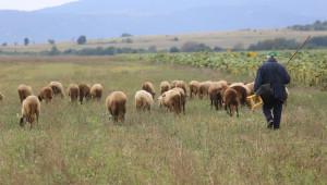 За една година: Земеделската продукция продължава да намалява - Agri.bg