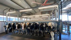 Стопанство в Новозагорско: Еталон за високотехнологична кравеферма