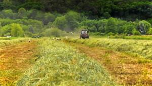 Мнение: Субсидиите в ЕС засилват екологичното замърсяване