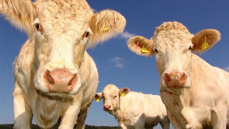 Как да произвеждаме мляко по-евтино