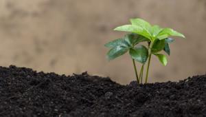Производител: Биоземеделието е алтернативата за бъдещето