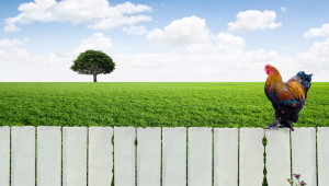 За Зелената сделка: Какво ще предприеме България?