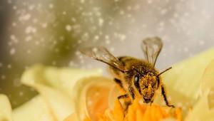 Храна и хранене на пчелите