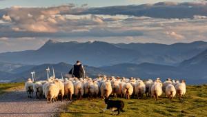 Животновъди: Дайте приоритет на родното производство