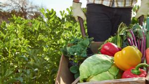 Как да преживеете пандемията, ако сте зеленчукопроизводител
