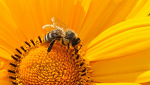 Грижи за пчелите през май