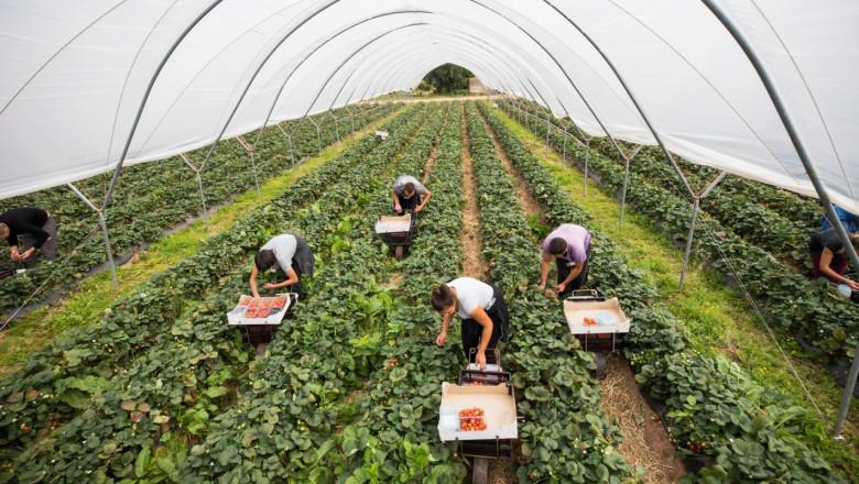 Сезонни работници полетяха за Великобритания | Agri.BG