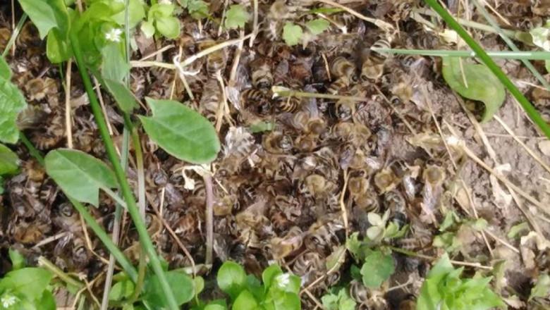 Мор на пчели в Плевенско – за четвърта година подред