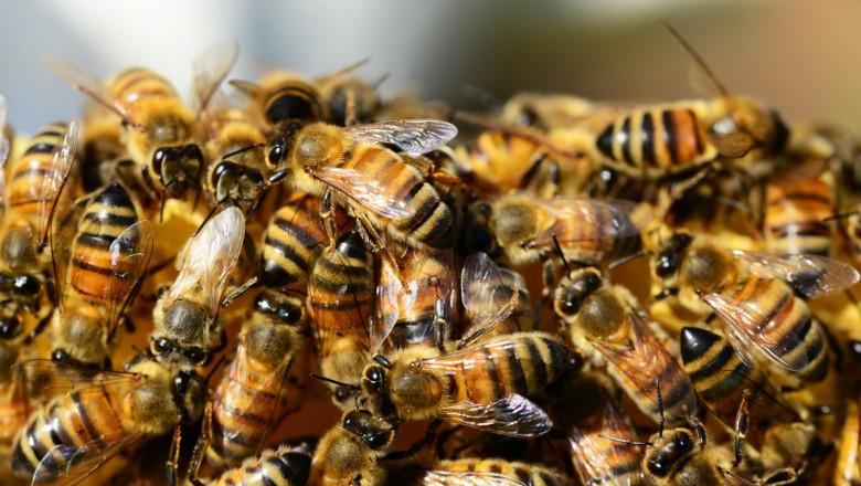 БАБХ проверява три сигнала за отровени пчели в Плевенско