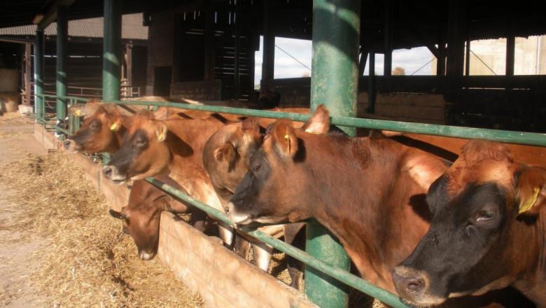 Магазин на колела: Чешки пример за фермерски доставки