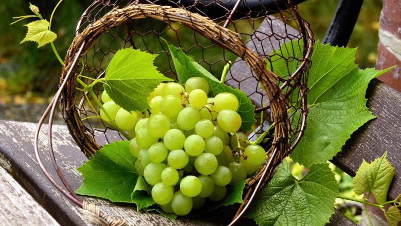 Лозаро-винари: Липсва дългосрочна държавна стратегия за сектора
