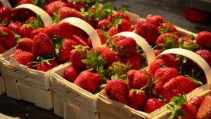 Можете да произвеждате ягоди и през есента