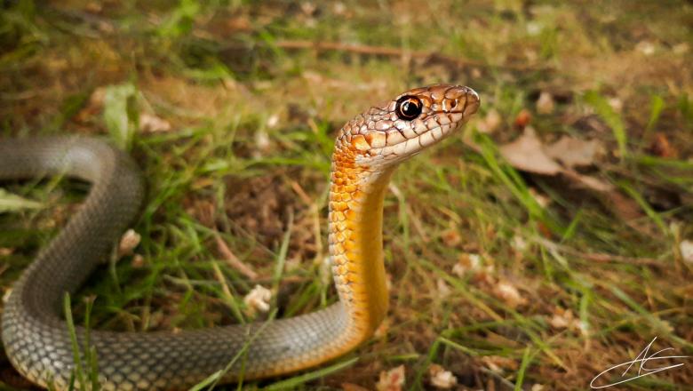 Опасни ли са змиите във фермата?
