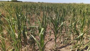 Сушата проваля реколтата в Северозапада