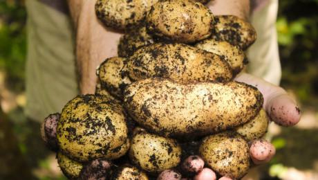 Танева: Пиперът и картофите търпят най-големи загуби - Agri.bg