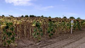 Има шанс за добри добиви от пролетниците в Шуменско