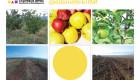 Ябълкова градина - Снимка 1