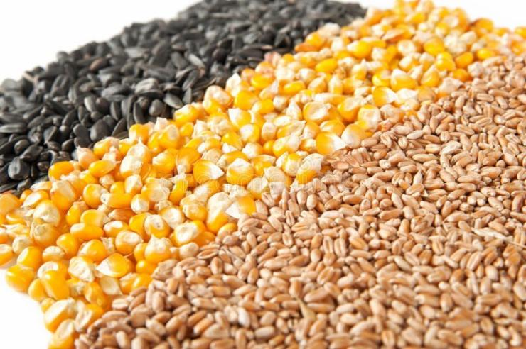 Изкупуваме Пшеница , Царевица и Слънчоглед - Снимка 1