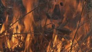 Изгоряха бадемова гора и лозови масиви