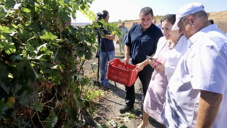 Министърът за гроздето: Движим се на средните нива от миналата година