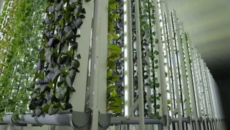 Как работи една вертикална роботизирана ферма?