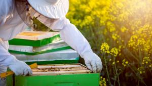 В края на октомври откриват прием по пчеларската програма за 2021 г.