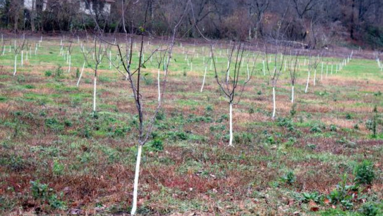 Грижи за овошките през есенните и зимните месеци