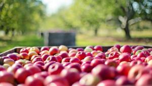 Овощар: Сега стопаните трябва да поработят за по-добра реколта
