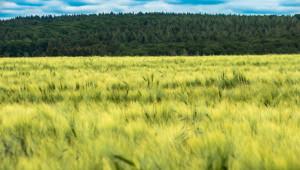 Доклад за ечемика: Българска селекция вади с 39% по-високи добиви