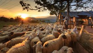Статистика: Как се променят животновъдните стопанства за година