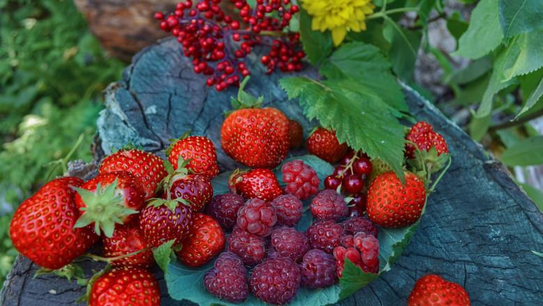 Устойчиви ягодоплодни сортове