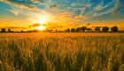 Купувам земеделска земя всички землища в Община Петрич - Снимка 1