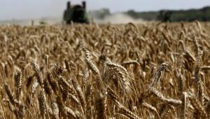 Износът на мека пшеница от ЕС и Великобритания удари 7,84 милиона тона