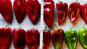 Фермер: Двойният аршин е проблем за зеленчукопроизводство