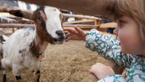 Експерт: Фамилните ферми да заложат на късите вериги на доставки - Agri.bg