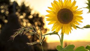 Създадоха най-пълния каталог на растителните видове