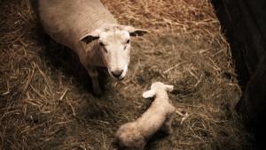 Животните в студените кошари ядат повече, но напразно - Agri.bg